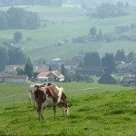 A Weekend in Emmental Switzerland