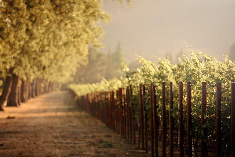 Romantic weekend getaway in napa valley for California romantic weekend getaways