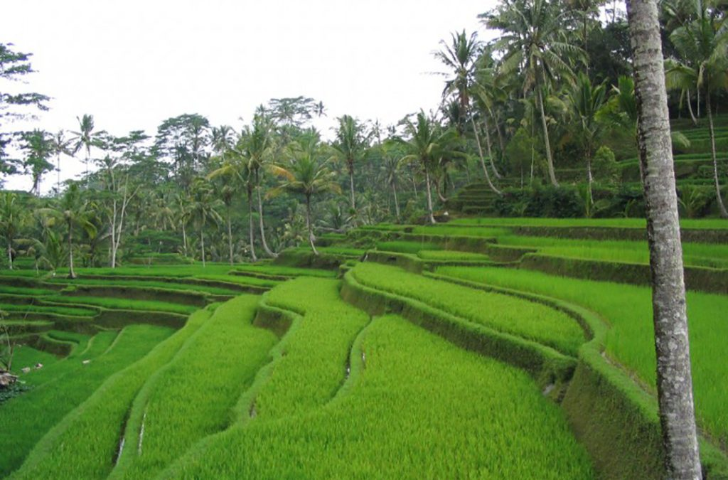 The Best Things to Do in Bali for First Time Visitors