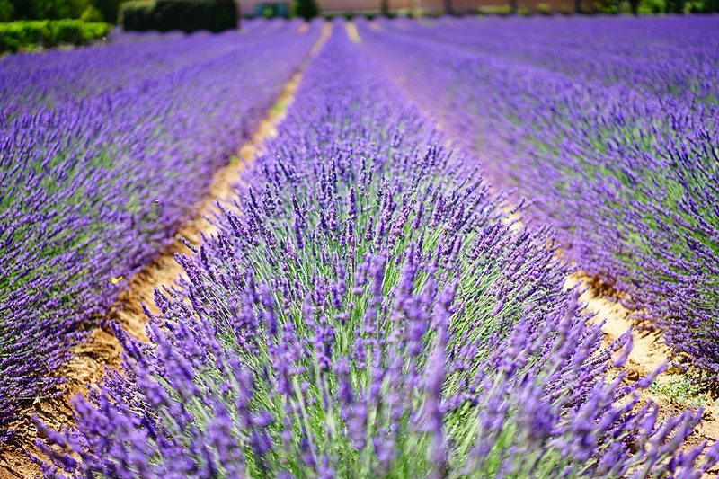 The 7 Most Beautiful Towns in Provence, France